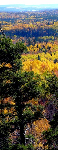 forest_colours